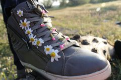 Sneakers in daisies Royalty Free Stock Image