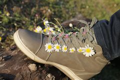 Sneakers in daisies Stock Photo