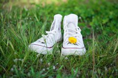 Sneakers and daisy Stock Photo