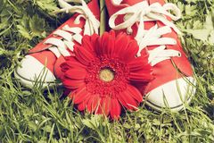 Sneakers and flower Stock Photos