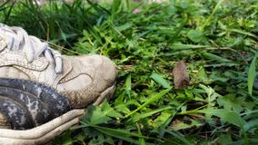 Sneakers on the grass. royalty free stock image