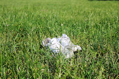 Sneakers on the grass. Someone left the shoes on the lawn Royalty Free Stock Photography