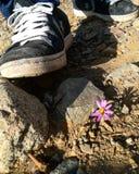sneakers kwiatu pięcie Zdjęcia Royalty Free