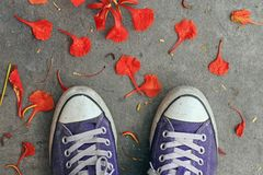 Sneakers, top view. Purple sneakers from an aerial view on concrete pavement, Top view stock photo