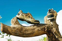 Sneakers on a tree Stock Photography