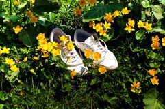 Sneakers on a wildlife background. White female shoes outdoors on green meadow with flowers. Sneakers closeup. stock images