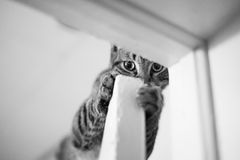 Sneaky Cat Royalty Free Stock Images