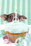 Sneaky cupcake dog Royalty Free Stock Photo