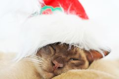 Sneaky sleeping Christmas pet cat with one eye open. A very cute and sneaky little cat looking gorgeous in his Santa Claus hat is sleeping but keeping one eye Royalty Free Stock Photos