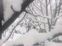 sneeuw royalty-vrije stock afbeelding