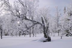 Sneeuw Royalty-vrije Stock Afbeeldingen