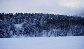 Sneeuw Stock Foto