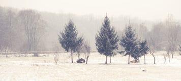 sneeuw Royalty-vrije Stock Foto's