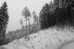 Sneeuw afgedekt bos Royalty-vrije Stock Fotografie