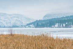 Sneeuw afgedekte bergen en bevroren meer met riet in voorgrond stock fotografie