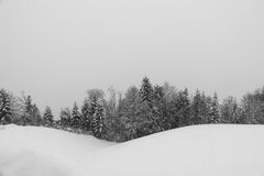 Sneeuw afgedekte bomen Royalty-vrije Stock Foto's