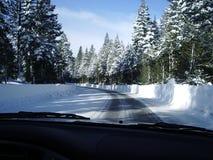 Sneeuw afgedekte bomen in Tahoe stock afbeeldingen