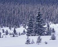 Sneeuw behandeld bos Royalty-vrije Stock Fotografie