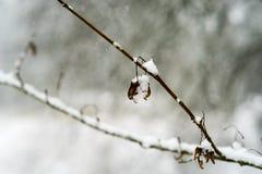 Sneeuw behandeld close-up Royalty-vrije Stock Afbeelding
