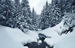 Sneeuw behandeld de winterbos Stock Foto's