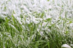 Sneeuw behandeld gras stock afbeeldingen