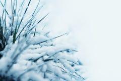Sneeuw behandeld gras royalty-vrije stock foto's