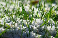 Sneeuw behandeld gras royalty-vrije stock fotografie