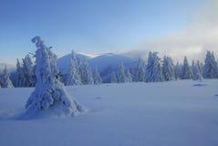Sneeuw behandeld landschap stock afbeeldingen