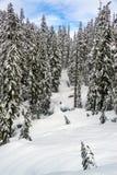 Sneeuw Behandeld Landschap op MT regenachtiger stock foto
