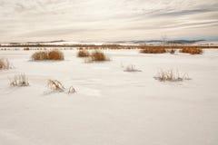 Sneeuw Behandeld Moeras Stock Afbeeldingen