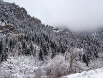 Sneeuw Behandelde Berg Stock Fotografie