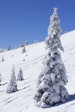 Sneeuw behandelde berg en sparren stock foto's