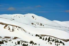 Sneeuw Behandelde Bergen met Pijnboombomen op een Duidelijke Dag Stock Fotografie