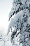 Sneeuw behandelde bomen Stock Fotografie