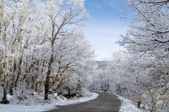 Sneeuw behandelde bomen Royalty-vrije Stock Foto's