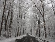 Sneeuw Behandelde Bomen stock afbeeldingen