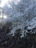 Sneeuw Behandelde Bomen Royalty-vrije Stock Afbeeldingen