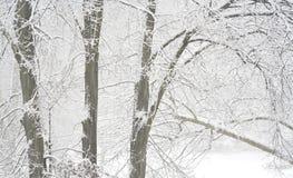 Sneeuw behandelde bomen, Royalty-vrije Stock Foto