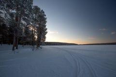 Sneeuw Behandelde Bomen Royalty-vrije Stock Fotografie