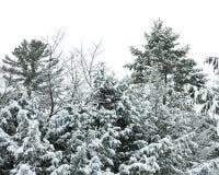 Sneeuw behandelde bomen in Adirondacks royalty-vrije stock foto's