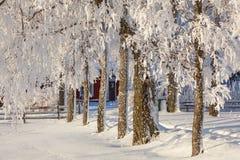 Sneeuw behandelde bomen bij een tuin Stock Afbeeldingen