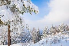 Sneeuw behandelde bomen in de bergen Royalty-vrije Stock Fotografie
