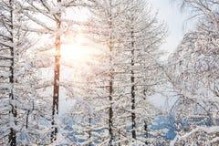 Sneeuw behandelde bomen in de bergen Royalty-vrije Stock Foto's