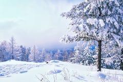 Sneeuw behandelde bomen in de bergen Royalty-vrije Stock Foto