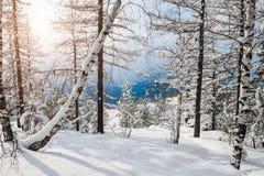 Sneeuw behandelde bomen in de bergen Stock Fotografie