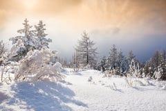 Sneeuw behandelde bomen in de bergen Royalty-vrije Stock Afbeelding