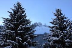 Sneeuw behandelde bomen in de winter Royalty-vrije Stock Afbeeldingen