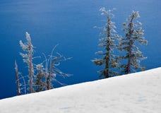 Sneeuw behandelde bomen door meer Royalty-vrije Stock Foto