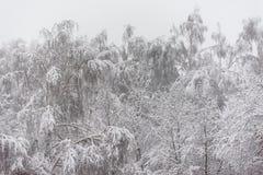 Sneeuw behandelde bomen en Kerstbomen Stock Foto's