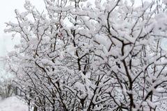 Sneeuw behandelde bomen en Kerstbomen Stock Fotografie